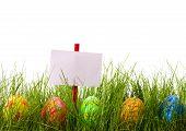 Easter Advertisement