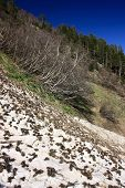pic of firn  - The mountains in the spring and summer General condition of spring and summer in the mountains  - JPG