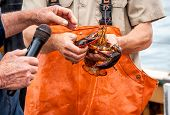 Maine Lobster Boat Demo, How-to Catch And Band Lobster From Trap, Handheld Lobster poster