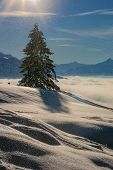 A Single Fir Tree Under A Winder Sunflare, With Heaps Of Snow Catching The Sun In The Foreground, An poster