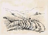 Tea Plantation Hand Drawing, Vintage Landscape. Draw Field poster