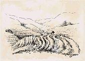 Tea Plantation Hand Drawing, Vintage Landscape. Draw Field poster