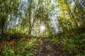 image of novosibirsk  - Path to the sun through the autumn forest  - JPG