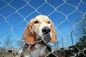 Captured dog