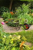 Summer Garden With Flowers And Wheelbarrow