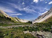 Stone Run In An Alpine Meadow