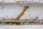 Termites Mud Tube