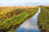Paisaje Rural holandesa en otoño