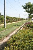 Plants And Rail