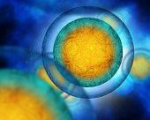 egg cells