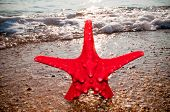 Red starfish on the beach with sun reflection in the background
