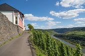 image of moselle  - Building and Vineyards along German river Moselle