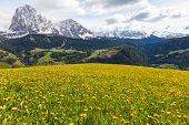 Alpine Meadow With Yellow Dandelions Flowers