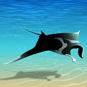 Flying Manta Ray