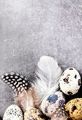 Quail Eggs With Feathers On Vintage Grey Scratched Textured  Background With Copy Space For Text. Ea