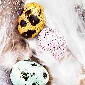Colored Quail Eggs With White Feathers Macro. Hq Photo Of Quail Eggs With Copy Space For Text.