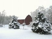 Snow covered trees & barn