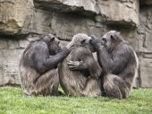 Monkeys on cleaning tasks