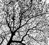 Treetops In Black And White Tone