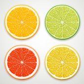 vector citrus slices