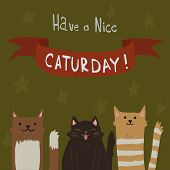 Cat's Saturday Postcard.