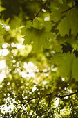 sunny day deep in the forest,tilt-shift lens blur
