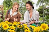 Two woman customers choosing sunflowers in garden center