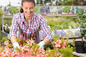 Smiling woman working with potted flowers at garden center