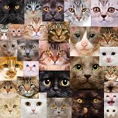 pic of puss  - Set of cats heads - JPG