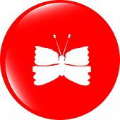 Butterfly Icon On Internet Button Isolated On White