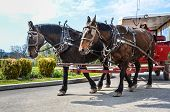 Carriage driver leads horses along road on Mackinac Islandd