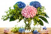 still life with blue and pink hydrangea