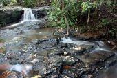 Stream in mountain rainforest - Gold coast hinterland, Queensland, Australia