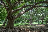 "picture of royal botanic gardens  - botanical Garden of Peradeniya Kandy""Royal Botanical Gardens asias most beautiful botanical Garden