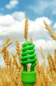 green eco bulb in field with harvest. soft focus