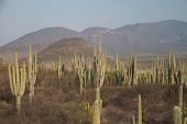 Land full of saguaro cactuses.