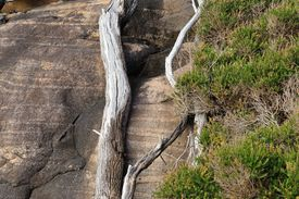 pic of gneiss  - Tree trunk and heathy shrubs against smooth face of granite gneiss - JPG