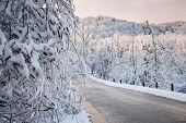Heavy branches covered with ice and snow near scenic winter road through icy forest after snowfall. Ontario, Canada.