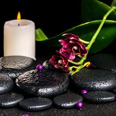 Beautiful Spa Concept Of Flower Orchid, Phalaenopsis, Candle, Beads And Zen Basalt Stones With Drops