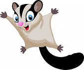 pic of possum  - illustration of Sugar glider cartoon isolated on white - JPG