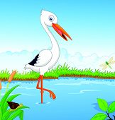White stork searching food vector
