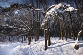 Winter Twilight In Forest