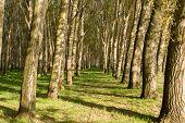 bright summer green forest