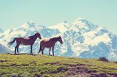 picture of fillies  - horse in mountains - JPG