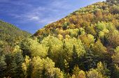 Autumn in Vio Valley, Pyrenees, Huesca, Aragon, Spain