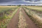 a long rural path on a cloudy day