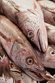 Eyes In The Fish Market