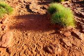 Foot Prints On Dry Orange And Ground In Australian Outback