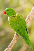 Nice green parrot in wild