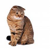 Sitting Portrait Of Big Cat